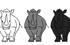 waarom-is-een-witte-neushoorn-grijs