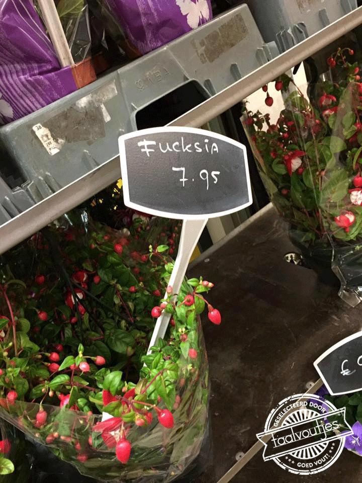 4 fucksia