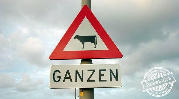 14_201601_FB_Mieke_Vos_Ganzen_Koeien_logo