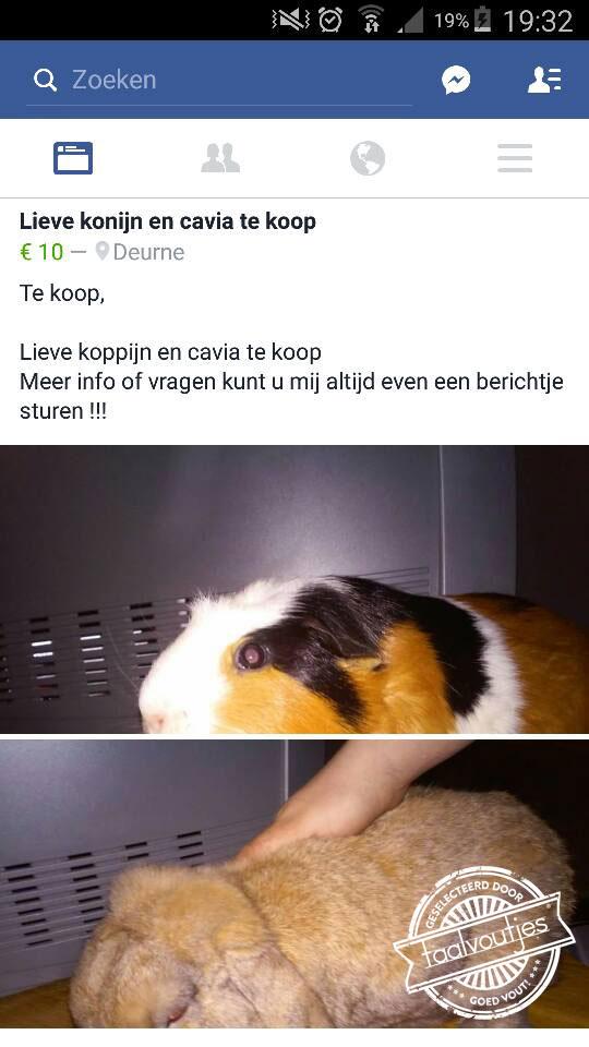21_Kopie-van-Kopie-van-201602_fb_Veerle-Bijsterveld_konijn_koppijn_logo