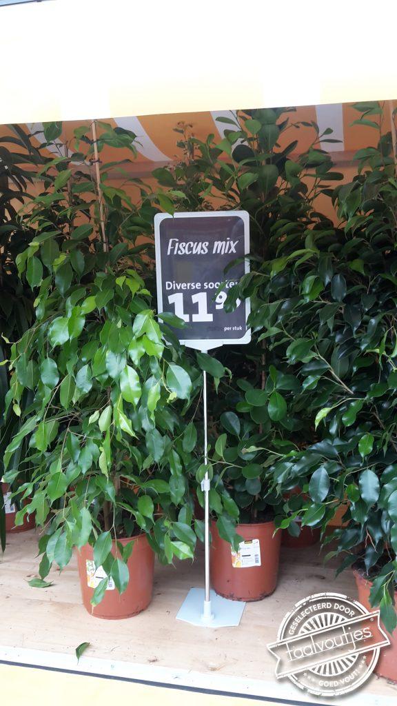 022_148149_201609_wp_annemarie-de-leeuw_fiscus-mix_ficus_jumbo_supermarkt