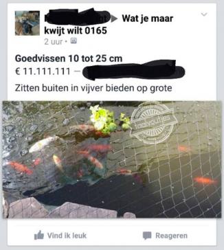 Die vissen zijn goud waard!