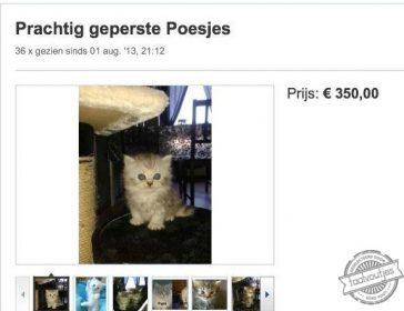 Iemand nog interesse in een geplette kat?